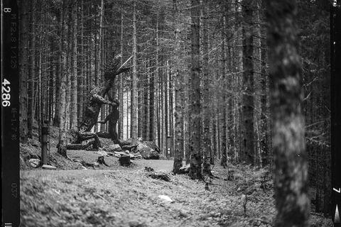 160518-Feuerstein-Sagenweg-11-min