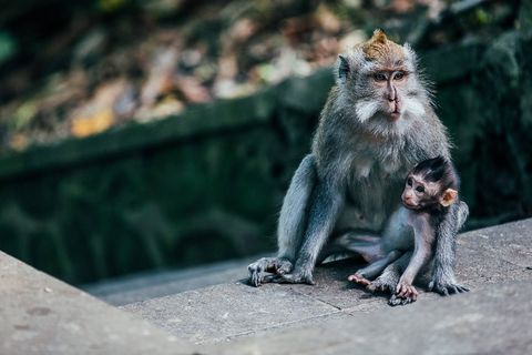 LE-160911-Urlaub-Bali-1534-min